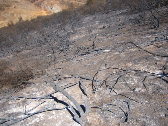 Quebrada de la Plata is a National Reserve near Santiago which has many endemic species only found in the mediterranean hills of the country. An uncontrolled wildfire in 2014 burned many km², seriously affecting the entire ecosystem.